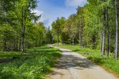 Forest road to the hut stock photos