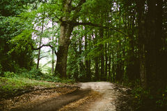 Road through leafy green forest Royalty Free Stock Photo