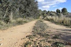 The road leaving afar. Dirt road. Unpaved road. The road leaving afar. The dirt road going to the horizon. Camino sin asfaltar Stock Image