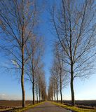 Road and line of trees Stock Photos