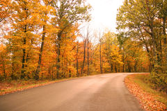 Road Lined With Autumn Trees Royalty Free Stock Photography