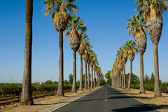 Road Lined In Palm Trees Royalty Free Stock Images