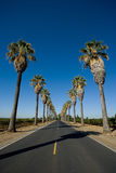 Road lined in Palm Trees Royalty Free Stock Photo