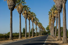 Road lined in Palm Trees Royalty Free Stock Photos
