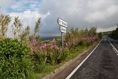 Road lined by plants and direction signs, Azores Islands