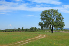 Road and lone tree. In the field Stock Photo