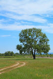 Road and lone tree Stock Image