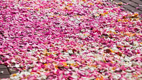 Road of love from petals Stock Photo
