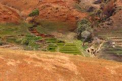 Road through Madagascar highland countryside landscape. Royalty Free Stock Photo