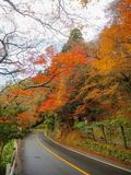 Road with maple tree stock image