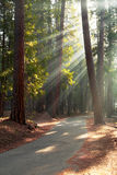 Road through Mariposa Grove Royalty Free Stock Photos