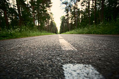 Road marking. In the forest Stock Photos