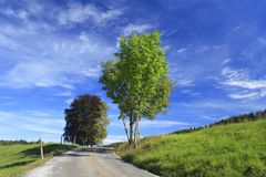 Road in a meadow Royalty Free Stock Photo