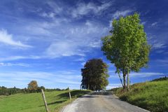 Road in a meadow Royalty Free Stock Images