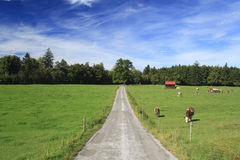 Road in a meadow Stock Images