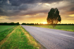 Road in meadow Royalty Free Stock Photo
