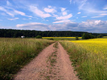 Road and meadow. Rural landscape. Road, meadow, the sky and clouds stock images