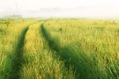 Road through the meadow Stock Photography