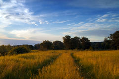 Road through the meadow at autumn evening Royalty Free Stock Photo