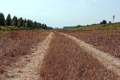 Road through the meadow. Improvised road through the meadow Royalty Free Stock Image