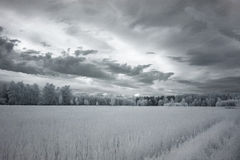 Road through  meadow near Mochala. IR photo. Stock Image