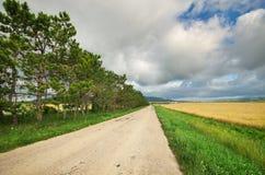 Road in meadow on sundown. Stock Image