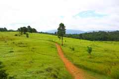 Road , meadow, Thailand Royalty Free Stock Photography