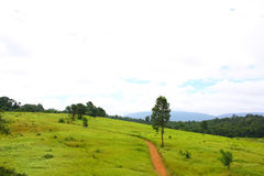 Road , meadow, Thailand Royalty Free Stock Images