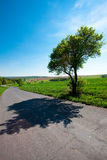 Road and  meadow with trees against the blue sky Stock Photography