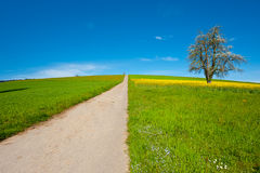 Road in Meadows Royalty Free Stock Photo