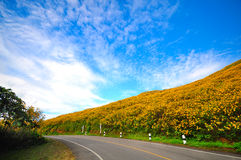 Road Mexican Sunflower hill. Road and Mexican Sunflower hill Stock Photo