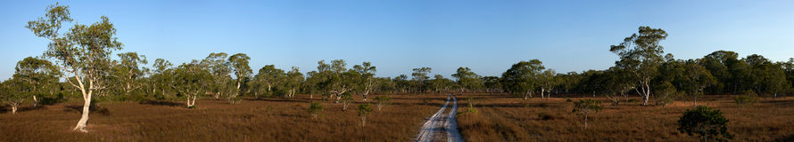 The road through the middle of biome Savanna sunset time with Pa Royalty Free Stock Images