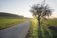 Road in the middle of the field to the village with morning glow. royalty free stock photo