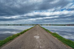 Road in the middle of flooded rice fields stock photos