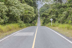 The road in middle forest Royalty Free Stock Photo