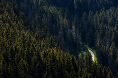 Road in the middle of forest, view from above Royalty Free Stock Image