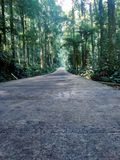 road in the middle of the forest royalty free stock photography