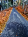 Road at the middle of leaves in fall. stock photo