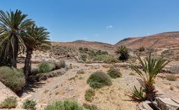 On the road of Mirleft - Morocco. On the road of Mirleft near Aglou and Tiznit - Morocco Royalty Free Stock Photography