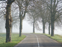 Road and mist. Road in France with trees and mist Stock Photo