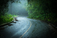 Road with mist. Road through in dark forest with mist Stock Images