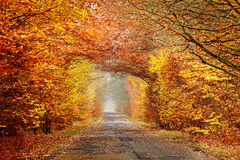 Road in a misty autumnal forest, intense colors filtered. Stock Photo