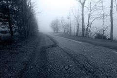 Road in the misty forest Stock Photography