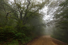 Road through misty forest. Dirt road through a foggy forest in the morning Stock Images
