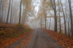 Road at misty forest Royalty Free Stock Photography