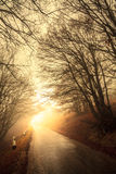 Road through misty forest Stock Photography