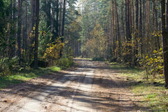 Road through mixed wood. Stock Photo