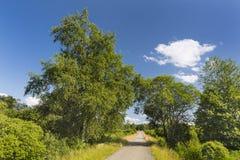 Road Through Moor Landscape In The High Fens, Belgium Stock Images