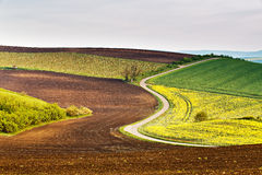 Road in Moravia hills in April. Spring fields stock images