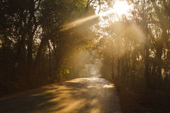 Road through the morning forest. Sun Royalty Free Stock Photo